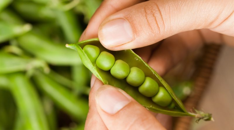 5 Edible Stems and Leaves You Are Throwing Away